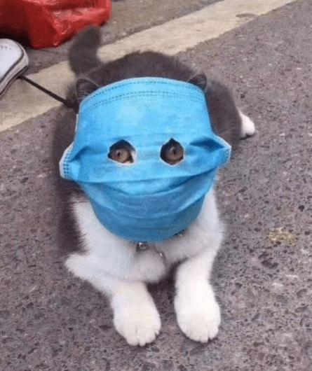 Coronavirus Special Mask