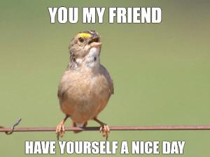 Common Opinion Sparrow Meme