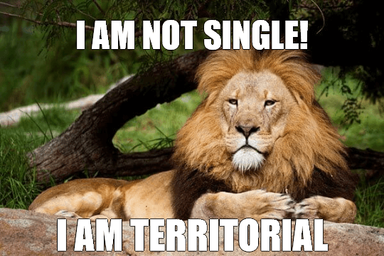 Contemplative Lion Meme