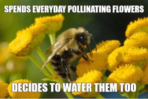 Bee Meme